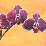 Aubergine Glow, Third On Canvas Alexis Martinez Puleio, Purple Orchid Painting