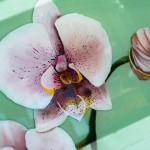 Close Up Of resined Orchid Painting, Third On Canvas Alexis Martinez Puleio